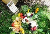 Sana Alimentación / Alimentos orgánicos, recetas, menús especiales.