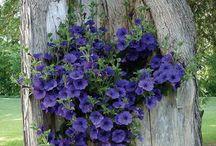 gardening/floral decor