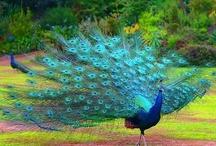Păsări si culori.