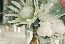 Garden - Proteas
