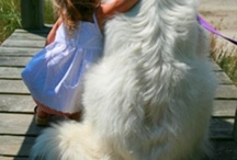 My dog family / All the breeds I've owned / by Kathy Page