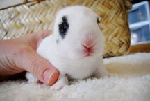cuteness / Never enough--mostly rabbits :)