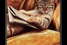 Gatos divertidos / Imágenes de gatos divertidos