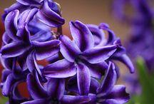 Moje záliba ,květiny / květiny