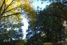 Central Park / Fotos propias realizadas en otoño de 2015... creo que es una de las épocas más bonitas en Central Park