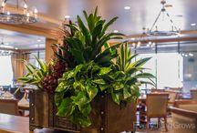 Indoor Plants Classic Design / Indoor plants with traditional/elegant design