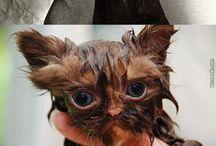 Yıkanmış kediler