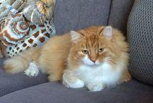 Katter / My cat Nansen❤️