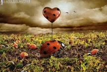 Love / by Rosa Apple