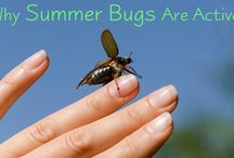 Summer Bugs & Pests
