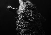 "Fotografie ""black"" / by Annemie Sips"