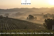 Wijnhuizen / De wijnhuizen van Piemonte Wijn