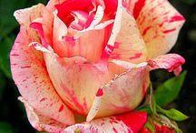 Floral Addictions