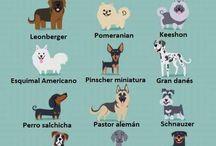DOG  LOVERS / PERROS / Destacar y admirar al MEJOR AMIGO del hombre, en sus diferentes  razas.