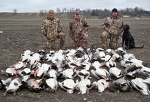 Missouri spring snow goose hunting  / Photos from the field