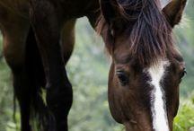 Heste bilder