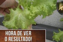 Videos - Hortaliça / Como cultivar uma horta