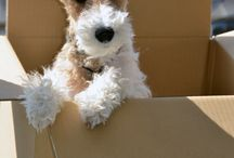 wirefoxterrier