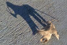 Shadow Shazam