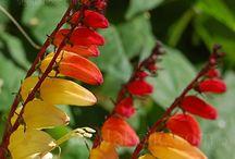 Volcano herb & flower garden