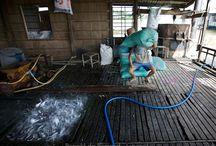 Experience 4 Viskwekerij / Vis is een van de belangrijkste exportproducten van Vietnam. Er bevinden zich op dit moment 157 viskwekerijen in de Mekong Delta. In de meeste kwekerijen wordt de Pangasiusvis gekweekt. Deze vis behoort tot de meervalsoort en wordt geëxporteerd naar zo'n honderddertig landen.
