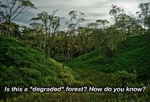 REDD / All pins here are related to REDD. / by CIFOR - Center for International Forestry Research