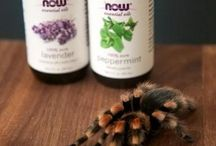 Natural Remedies for Spiders, other bugs and cleaning