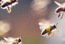 Bee board / I love bees...