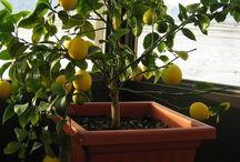 Kertészkedés / Gardening....