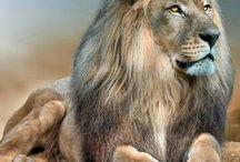 fatherhood animals