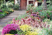 Gardening / by Amanda Outlaw