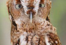 Owls / Deirdre loves these birds