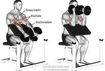 Δικέφαλος workout