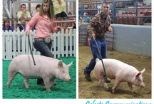 4-H tips and ideas