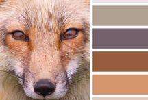 Animal Colors (Állati színek) / Szépséges állatvilág