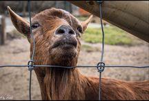 Animals / Tieraufnahmen