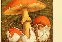 картинки грибы