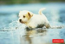 B E A U T I F U L  -  P U P P I E S! / small puppies, pug puppies, pitbull puppies, havanese puppies, maltipoo puppies, cockapoo puppies and more... / by ::: AMAZING IMAGES :::
