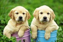 Cachorrinhos fofos!