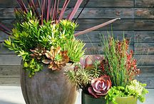 Container Plantings / Ideas for planting in pots