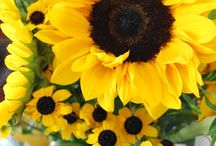Sun, Sunflower, Summer