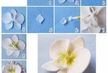 tutorial orchidee