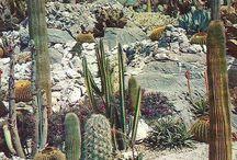 Arizona living / New house ideas / by Jacky Lemley-Taylor