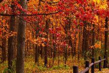 Autumn ❤️ Jesień