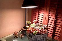 入賞作品『Indoor Green Style グリーンのある暮らし』フォトコンテスト / http://greensnap.jp/contest/41