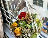 Terrariums | Colorado Alpines & Wildflower Farm / Terrariums make living art out of unique plant design. Enjoy these ideas...and try crafting your own.  www.thewildflowerfarm.com