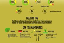 Tree Maintenance / Some tips on how to take care of your Seeds of Life tree!