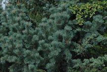 puut, pensaat, köynnökset
