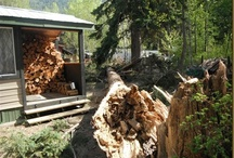 Cabin Stories / This tree was about 125 feet tall and when it fell it didn't hit anything. Not the cabin, not the boat, not the shed. Now that was a lucky day and we ended up with more firewood too.