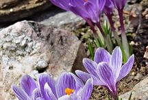 Springtime in New Hampshire / Fun things to see and do in New Hampshire this spring!